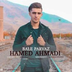 دانلود آهنگ سنتی بال پرواز از حامد احمدی